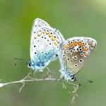 pairing-1504187_1280