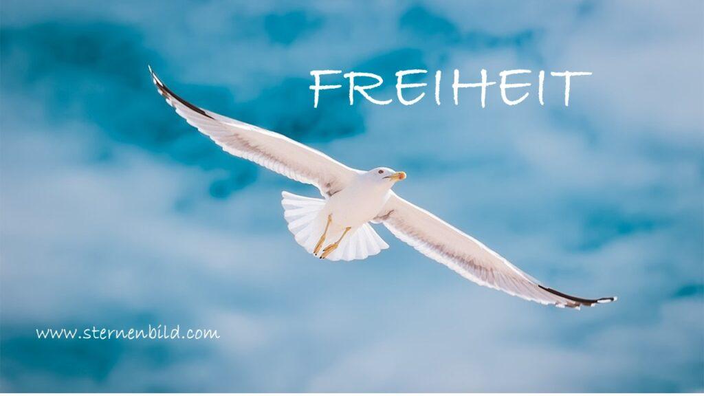 Freiheit, Vogel, fliegen